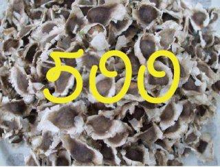 モリンガネシアンの種  500粒