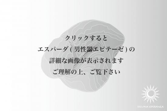 エスパーダ(男性器エピテーゼ)