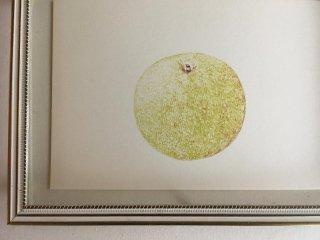 梨のポストカード