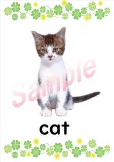 小学生子供の英語英会話フラッシュカード(動物 Animals)25枚ダウンロード