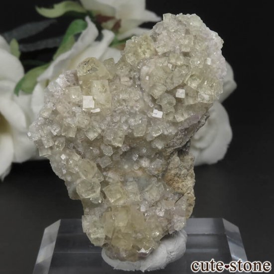 フランス Giromagny産 イエローフローライトの母岩付き原石 No.2
