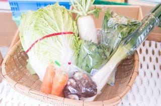 鹿児島冬の野菜セット(お鍋用)