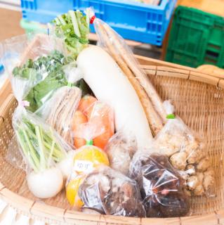 【お野菜約11種類】栄養満点!煮物セット