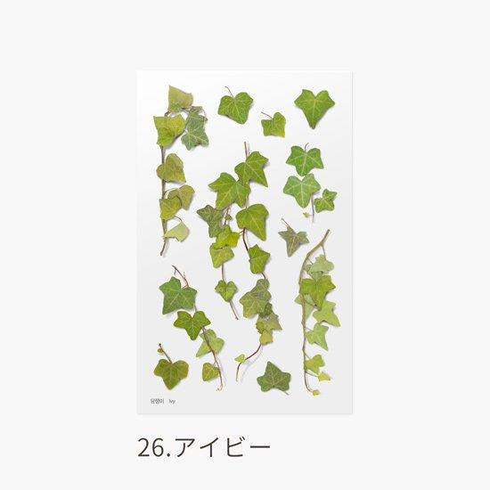 ミニバラの押し花シール
