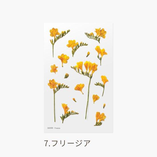 カスミソウの押し花シール