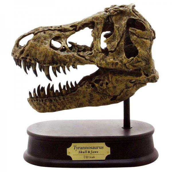 ティラノサウルス スカル