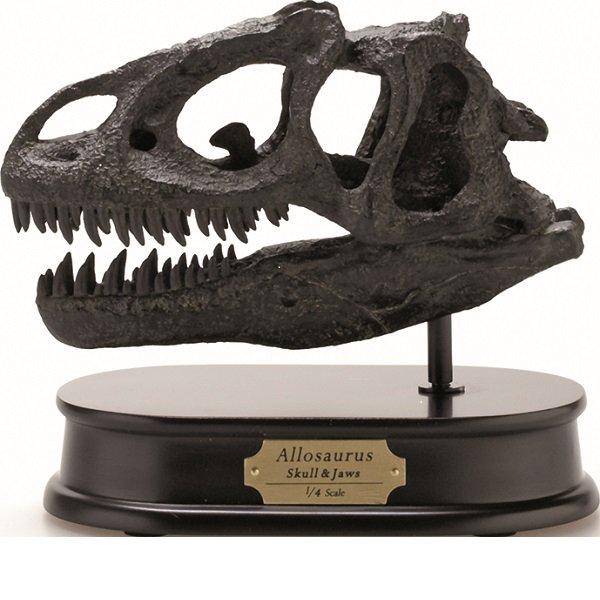 アロサウルス スカル