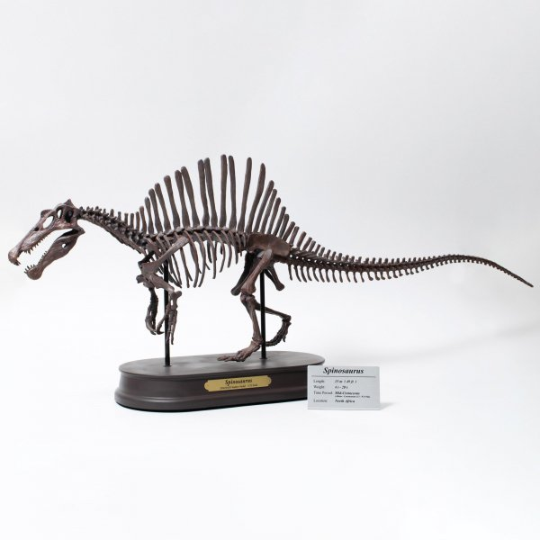 スピノサウルス スケルトンモデル