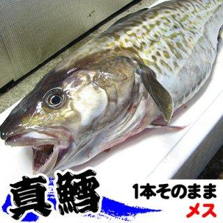 (冷蔵)生真鱈【メス】 1本約5kgまたは6kg