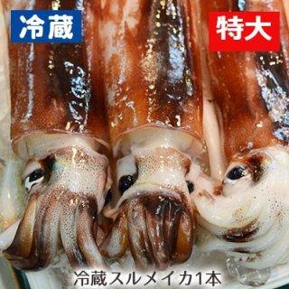 【冷蔵】八戸沖産するめイカ特大 (1杯)※12ハイまで1梱包