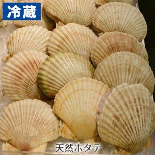 (冷蔵)特大北海道産天然ホタテ(12cm以上)1枚※注文数が多い場合には発送までお待たせする場合がございます