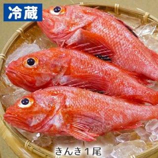 (冷蔵)きんきん1尾(約400〜500g)