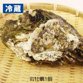 (冷蔵)岩手〜宮城産養殖岩牡蠣(岩ガキ)1コ(約300g前後)