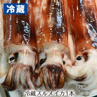 【冷蔵】八戸沖産するめイカ大 (1杯)※15ハイまで1梱包