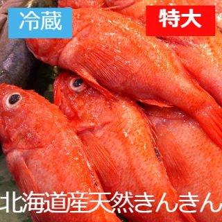 [冷蔵]【数量限定】北海道網走産 天然きんきん特大700g