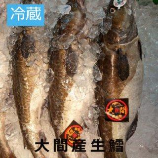 (冷蔵)青森大間産 【オス】1本 約5kgまたは6kg