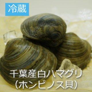[冷蔵]白はまぐり(ホンビノス貝)4個〜5個