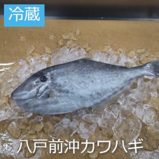 [冷蔵]八戸前沖天然カワハギ