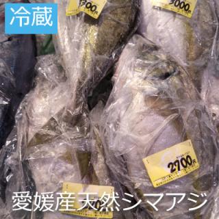 [冷蔵] 愛媛産 天然シマアジ