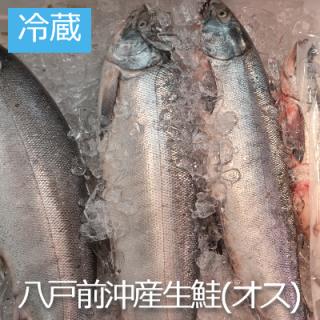 (冷蔵)生鮭約2kg〜2.5kg 【オス 】1本