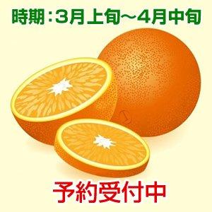 清見オレンジ 家庭用10kg