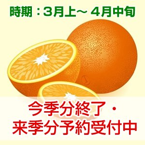 清見オレンジ 贈答用 3kg