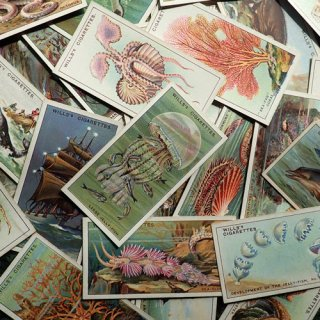 【 Andart 】Cigarette Card  / WONDERS OF THE SEA / 1928 / Complete Set of 50