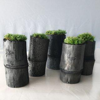 苔庭ミニセット<br>(5個セット)<br>