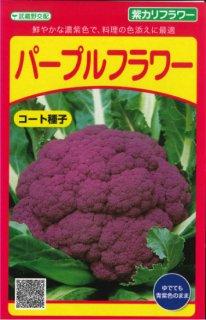 紫カリフラワーの種【パープルフラワー】〔F1〕