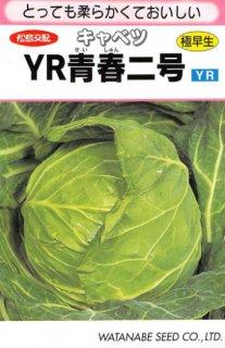 キャベツの種【YR青春二号】〔F1〕 ※無消毒