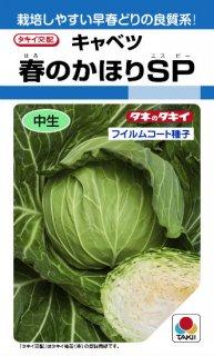 キャベツの種【春のかほりSP】〔F1〕 ※無消毒