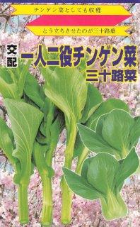 チンゲン菜花の種【三十路菜】〔F1〕 ※無消毒