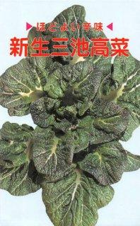 タカナの種【新生三池高菜】〔固定種〕 ※無消毒
