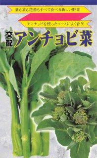 アンチョビ菜の種〔F1〕 ※無消毒