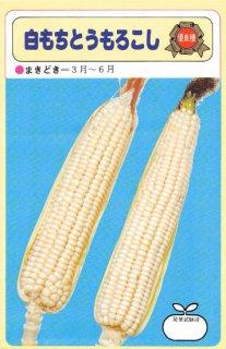 トウモロコシの種【白もちトウモロコシ】〔固定種〕 ※無消毒