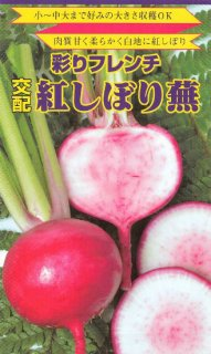 赤カブの種【紅しぼりカブ】〔F1〕 ※無消毒