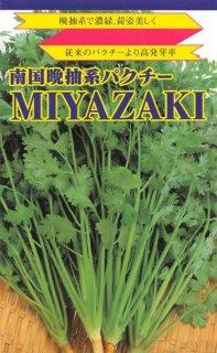 パクチーの種【南国パクチー MIYAZAKI】〔固定種〕