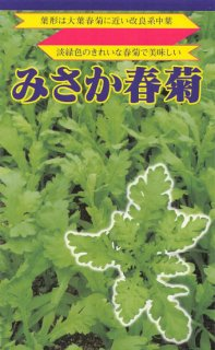 シュンギクの種【みさか春菊】〔固定種〕 ※無消毒