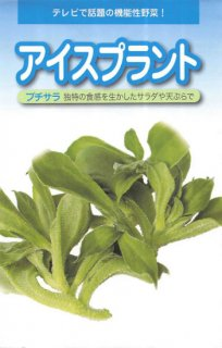 アイスプラントの種【プチサラ】〔固定種〕 ※無消毒
