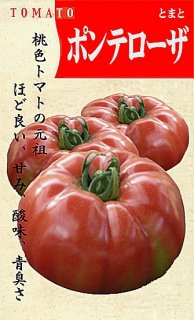 トマトの種【ポンテローザ】〔固定種〕 ※無消毒