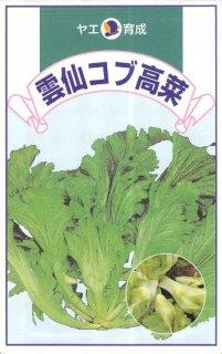 タカナの種【雲仙コブ高菜】〔固定種〕