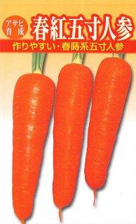 ニンジンの種【春紅五寸】〔固定種〕