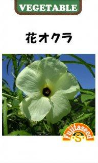 花オクラの種〔固定種〕 ※無消毒