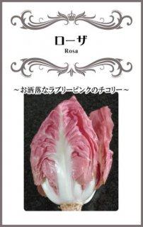 チコリーの種【ローザ】〔固定種〕 ※無消毒