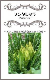 プンタレッラ(アスパラガスチコリー)の種