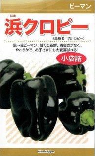 カラーピーマンの種【浜クロピー】〔固定種〕 ※無消毒