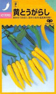トウガラシの種【黄とうがらし】〔固定種〕