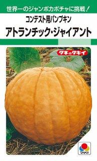 巨大カボチャの種【アトランティック ジャイアント(観賞用)】〔固定種〕