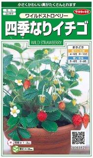 ワイルドストロベリーの種〔固定種〕
