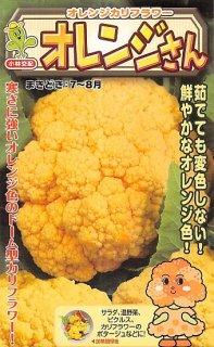 オレンジカリフラワーの種【オレンジさん】〔F1〕 ※無消毒